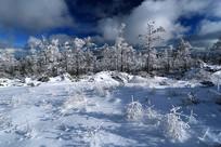 林海雪原景观