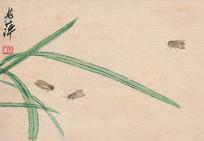 齐白石虫草图