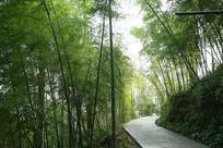 竹林里的小路