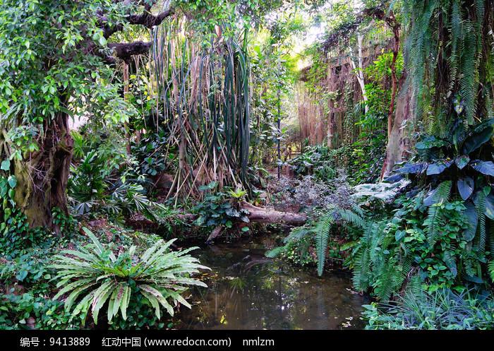 茂密的热带植物 图片