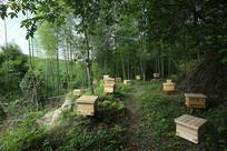 大山里的养蜂基地