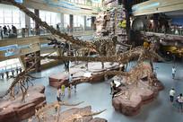博物馆恐龙展