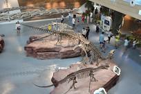 恐龙化石展厅