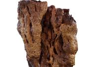 巨型千年胡杨木根雕