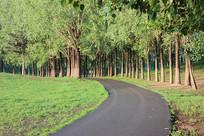 公园道路边的成排树木