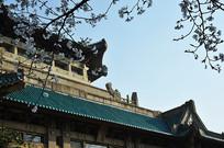 武大图书馆樱花季