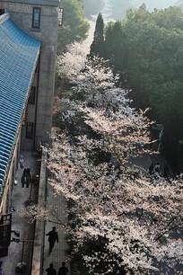 樱花步道竖构图