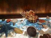 海贝壳展示