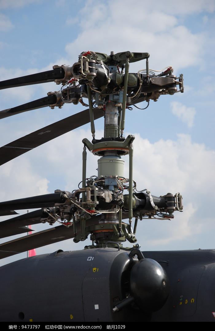 雌鹿直升机浆鼓特写图片