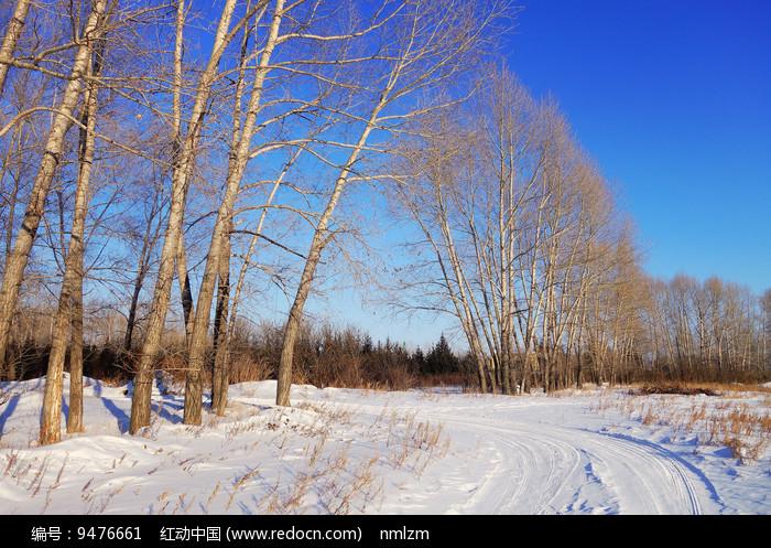 雪原杨树林小路图片