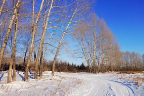 雪原杨树林小路