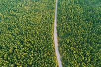 穿越绿色林海的山林公路