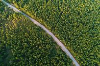 绿色林海公路