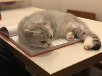 一只安静的猫