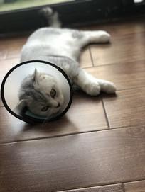 一只葛优躺的猫