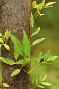 树上嫩芽嫩叶
