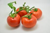 绿色藤叶的番茄