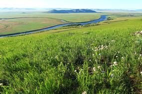 呼伦贝尔草原山花盛开