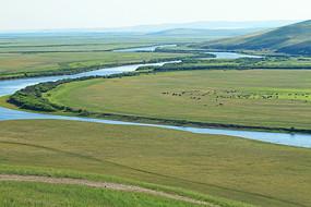 牧场河流马群风景