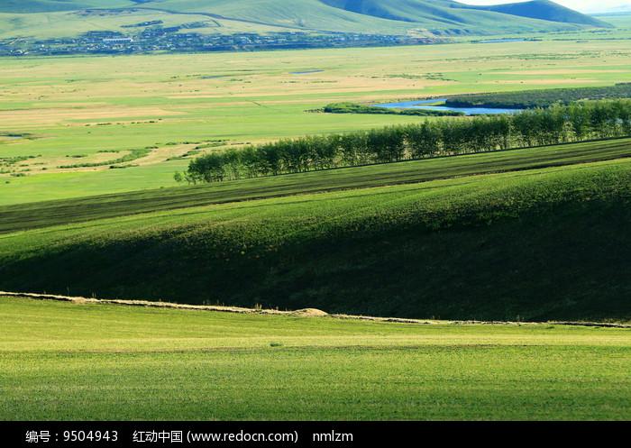 起伏的绿色原野 图片