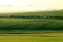 原野树林清晨晨雾
