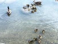 鸭子休闲游