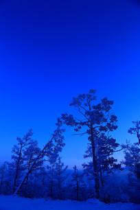 月光下的林海雪原