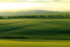 绿色农田晨雾缥缈