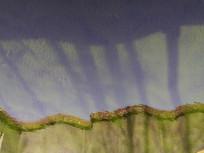 微波水面倒影创意背景素材