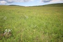 草原摄影素材