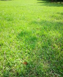 绿色草地高清背景图