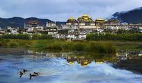 松赞林寺远景与湖边野鸭