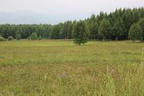 草原上的野花和松林
