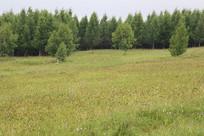开满野花的草原松林