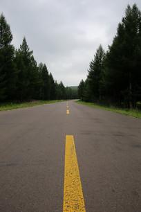 松树森林公路