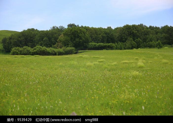 百花草坡上的绿树林图片