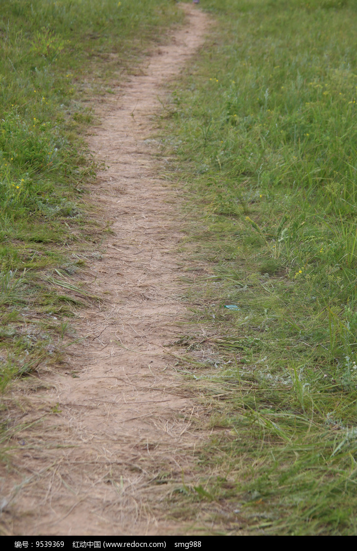 草坡上的小路图片