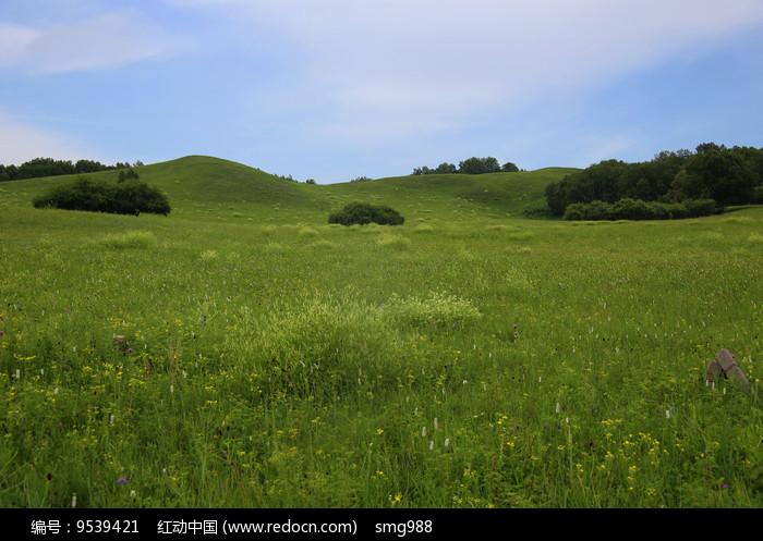 草原花开的美景图片