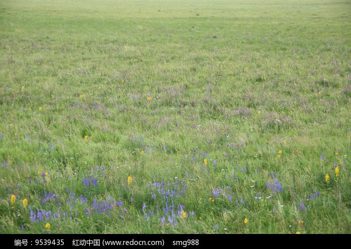 草原牧场开满鲜花图片