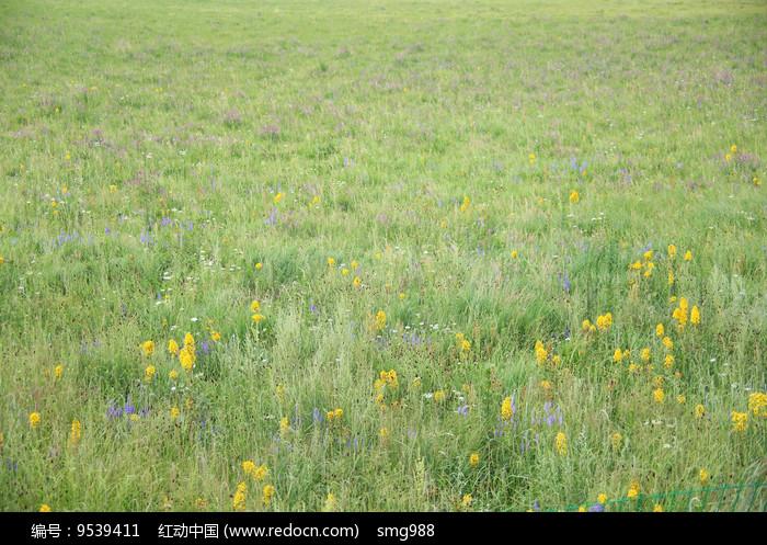 草原上的花海图片