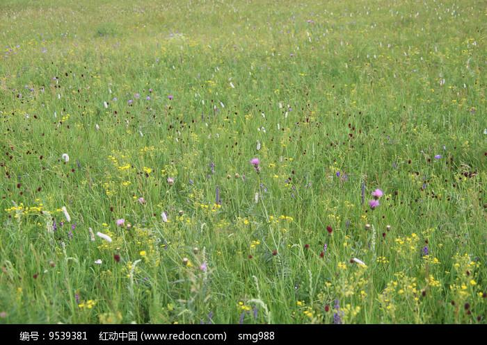草原上的花海花丛图片