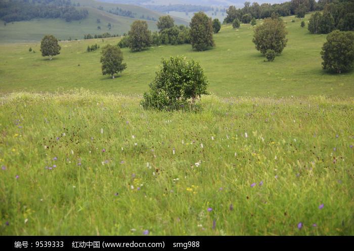 草原上的小树图片