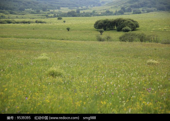 草原山谷树丛林图片