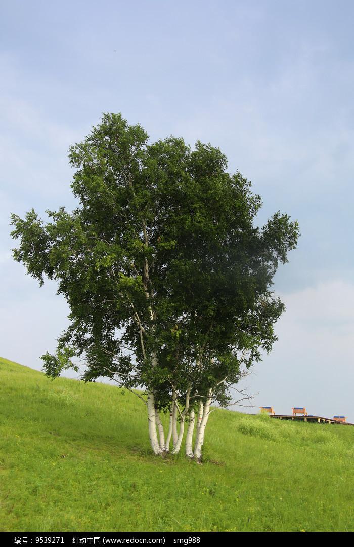 草原山坡上的小树图片