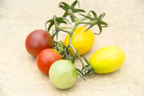 静物小西红柿
