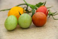 近景小西红柿