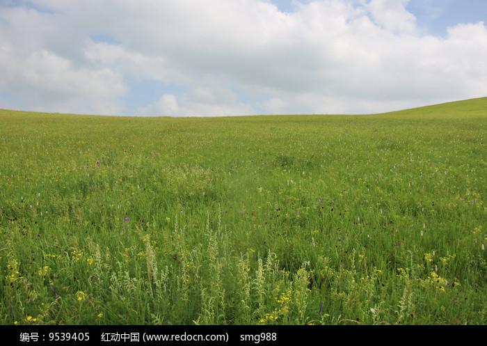开满鲜花的草坡图片