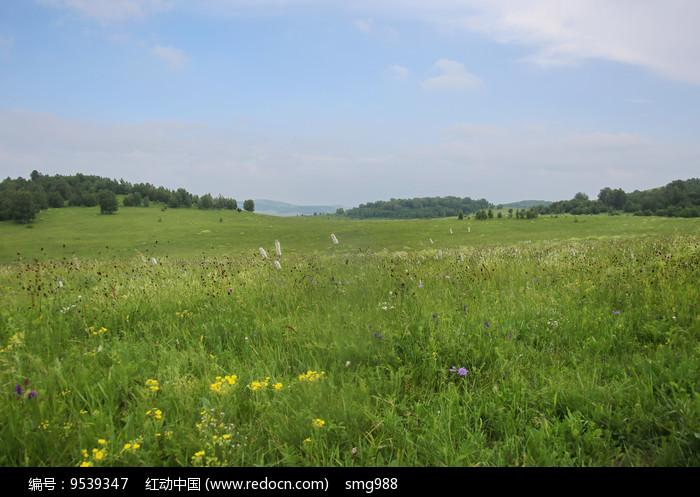 开满鲜花的草原图片