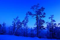 蓝夜森林雾凇