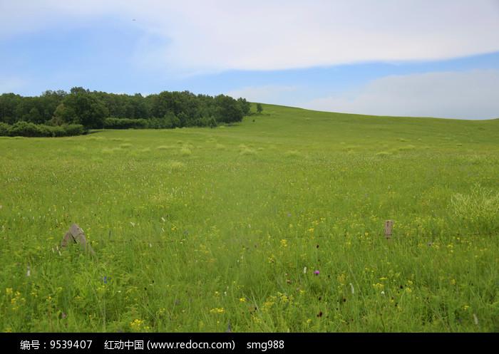 绿色的草坡树林图片